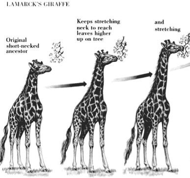 Image depicting the evolution of giraffes